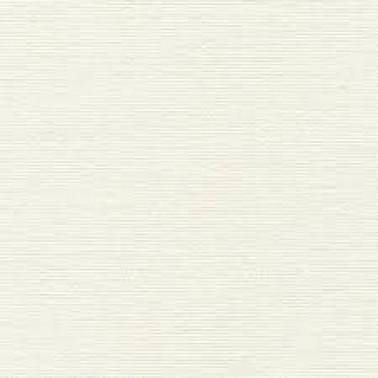 Acacia Ivory