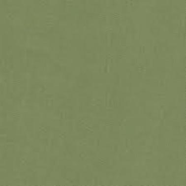 Acacia Olive